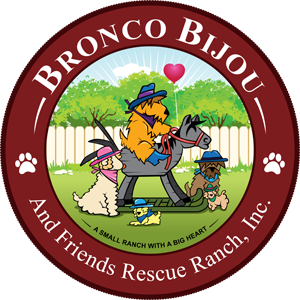 Bronco Bijou Rescue Ranch